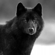 Wolf*